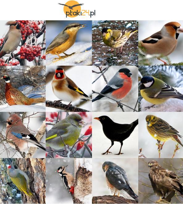 ptaki.jpeg