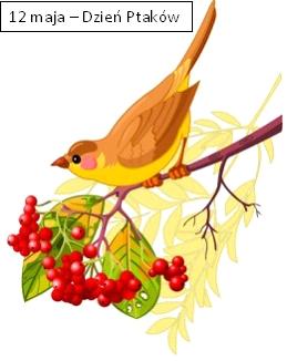 Ptaki.png