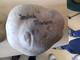 Galeria Dzień Ziemniaka